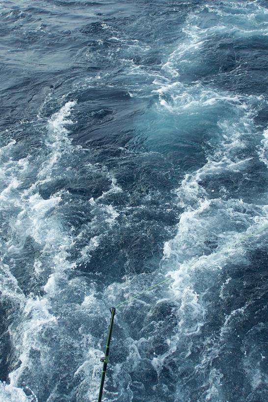 sportfishing wake